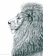 Lion Drawings Originals - Insights of a King - the Lion by Terra Summers