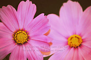 Living Waters Photography - Inspirational Flower 2