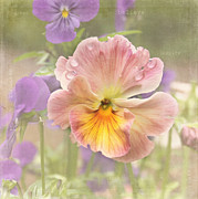 Pansy Photos - Inspire - Believe - Dream by Kim Hojnacki
