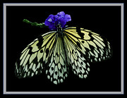 Inspired By Butterflies  Print by Inspired Nature Photography By Shelley Myke