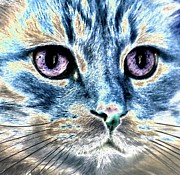 Kitten Prints Digital Art Framed Prints - Intense Focus Framed Print by Denise Oldridge