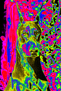 Dobie Prints - Intensity Print by Rita Kay Adams