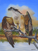 Intense Paintings - Intent Osprey by Phyllis Beiser
