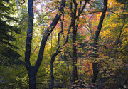 Mountain Fork Creek Prints - Intimate Forest Print by Peter Coskun