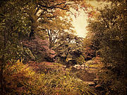 Autumn Trees Prints - Intimate Landscape Print by Jessica Jenney