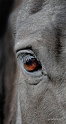 Horse Images Photo Framed Prints - Into the Deep Framed Print by Renee Forth Fukumoto