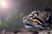 Clouded Leopard Posters - Into The Light Poster by Adrian Tavano