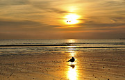 Nantasket Beach Prints - Into The Light Print by Joanne Brown