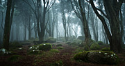 Nature Photos - Into the light by Jorge Maia