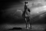 Forelock Photo Posters - Into the Light Poster by Karen Slagle