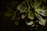 Hens And Chicks Photography Prints - Into the Light Print by Wenata Babkowski