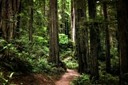 Michelle Calkins - Into the Magical Forest