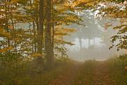Charles Kozierok - Into the Mist