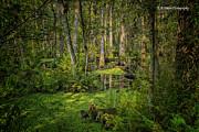 Barbara Bowen - Into the Swamp