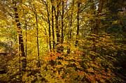 Saija  Lehtonen - Into the Woods We Go