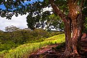 Jenny Rainbow - Invitation to Shadow Place. Chamarel. Mauritius