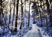 Snowy Road Prints - Inviting for a sunday walk Print by Gun Legler