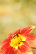 Bee Metal Prints - Inviting Metal Print by Reflective Moments  Photography and Digital Art Images
