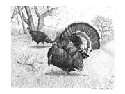 Turkey Drawings Metal Prints - Iowa Gobbler Metal Print by Cody Thorne