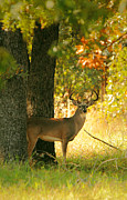 Rack Prints - iPhone Big Buck Print by Robert Frederick
