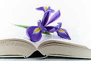 Purple Iris Prints - Iris and Book Print by Kristin Kreet