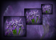 Shirley Mangini - Iris Art