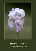 Iris Blessed Easter Greeting Card Print by Andrew Govan Dantzler