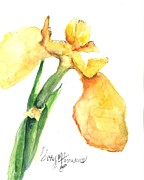 Iris Blooms  Print by Sherry Harradence