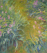 Iris Paintings - Iris by Claude Monet