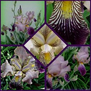 Gail Matthews Prints - Iris Collage Print by Gail Matthews