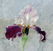 Irina Hays - Iris collection