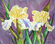 Iris Paintings - Iris Cream Duo by Kathryn Duncan