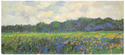 Field Of Flowers Paintings - Iris Field at Giverny by Claude Monet