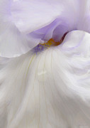 Purple Floral Prints - Iris Flower Raindrop Tear Print by Jennie Marie Schell