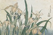 Plant Greeting Cards Art - Iris Flowers and Grasshopper by Hokusai