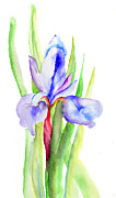 Textured Floral Painting Framed Prints - Iris flowers Framed Print by Regina Jershova