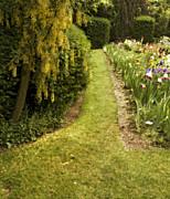 Bonnie Bruno - Iris Garden