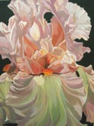 Alfred Ng - iris in pink