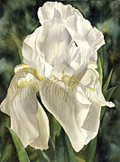 Faa Painting Prints - Iris In Spring Print by Alfred Ng