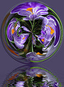 Flower Posters - Iris in the Bubble Poster by Keith Gondron