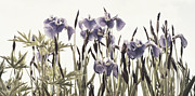 Ornamental Flower Prints - Iris In The Park Print by Priska Wettstein