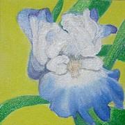 Iris Print by Melissa Torres