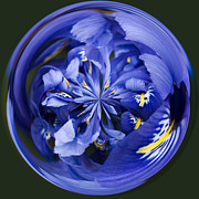 Iridaceae Framed Prints - Iris Orb Framed Print by Anne Gilbert