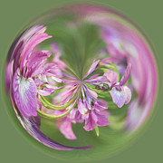 Abstract Iris Posters - Iris Orb  Poster by Kim Hojnacki