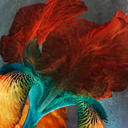 Iris Print Prints - Iris Sonata Print by Bonnie Bruno