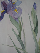 Jann Barron - Irises in Spring