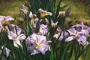 Philip White - Irises