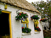Inishmore Prints - Irish Window Boxes Print by Denise Mazzocco