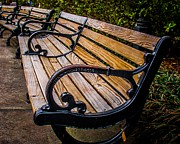 Park Benches Framed Prints - Iron Bench Framed Print by Perry Webster