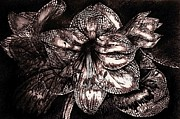 Pen And Pencil Drawings Drawings - Iron Butterfly  Violet by Julie Ann Caldwell